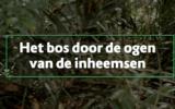 Afl. 13 Busi Taki: het bos door de ogen van inheemsen